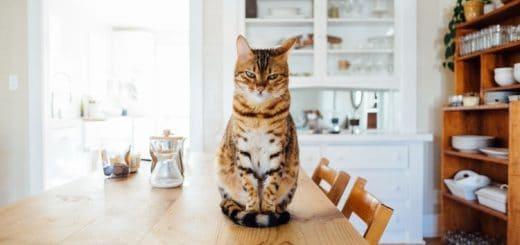 Chọn chú mèo mà bạn thích nhất sẽ bật mí những điều người khác đánh giá về bạn 2