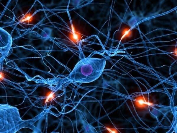 Ươm Mầm Một Nơron, Vun Trồng Một Bộ Não